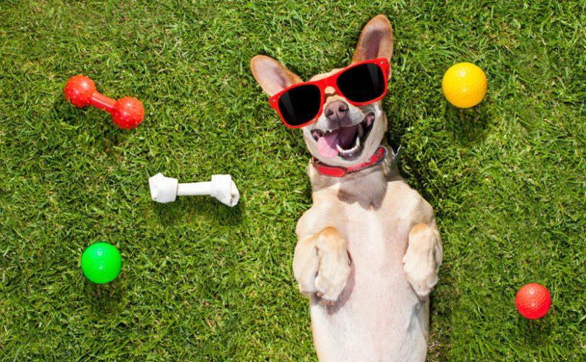 Pet Insurance – A Pet Owner's Best Friend